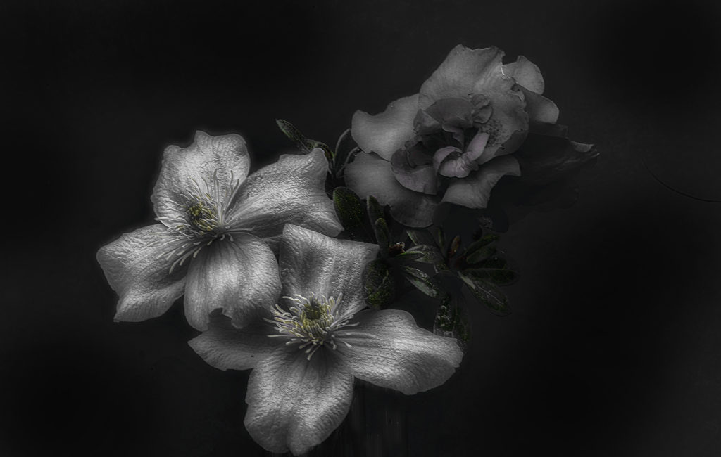 Flower photo art.