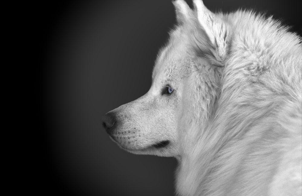 Célia's Dog
